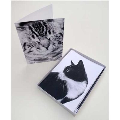 cat-greeting-cards-product-page