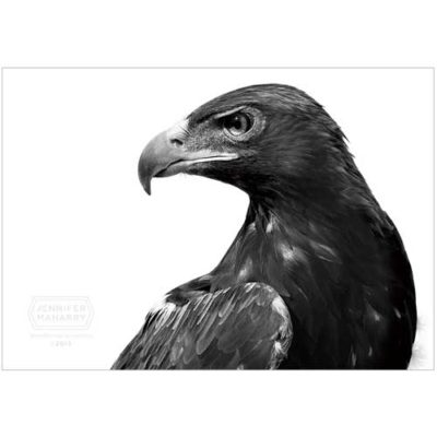 golden-eagle-product-page