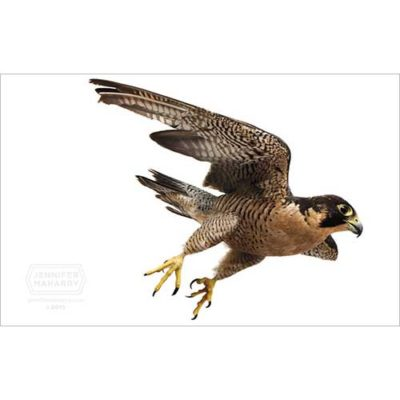 peregrine-diving-product-page