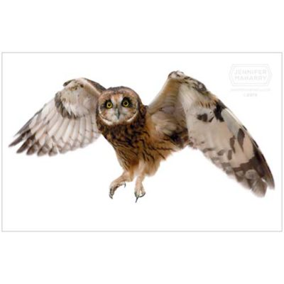 short-eared-owl-product-page