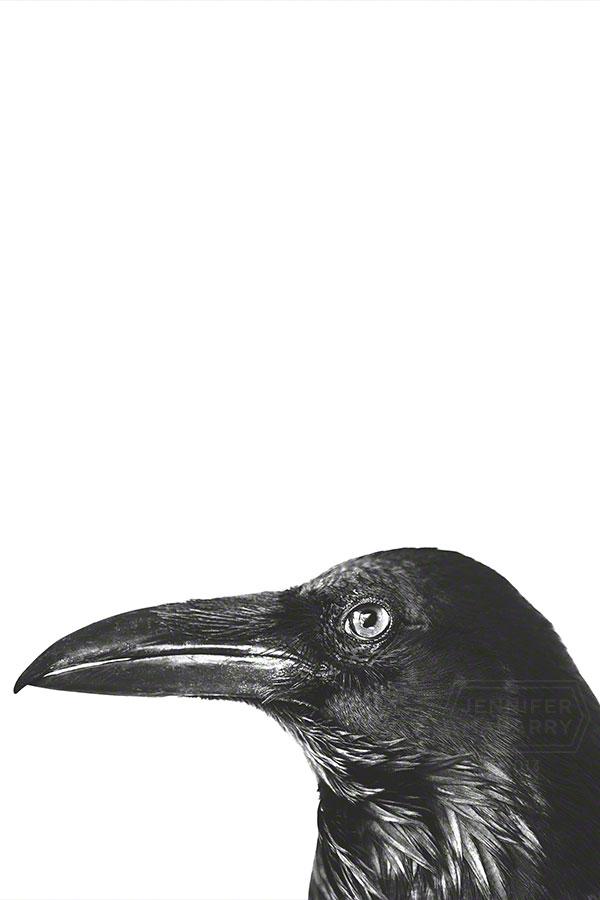 Raven Face