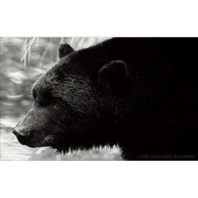 bear-gaze-product-page
