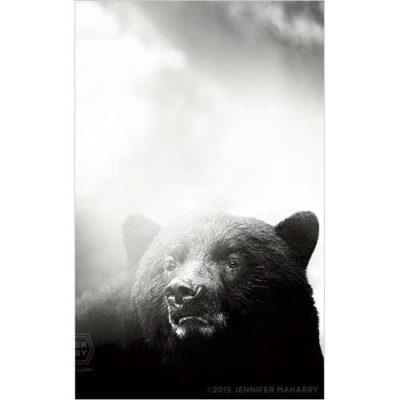 BIG-BLACK-BEAR-PRODUCT-PAGE