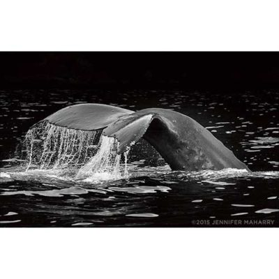 humpback-diving-product-page