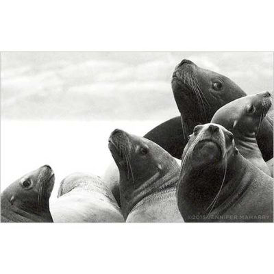 SIX-SEA-LIONS-PRODUCT-PAGE