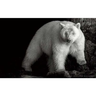 spirit-bear-cave-product-page