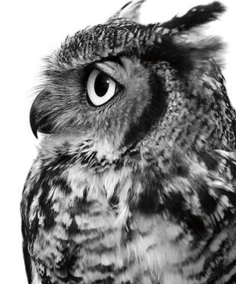 Great-Horned-Owl-400x600