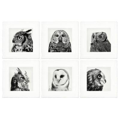 6 owl prints 500x500