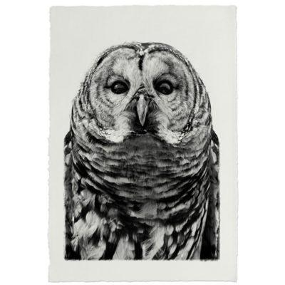 BARRED OWL HANDMADE PAPER 500x500