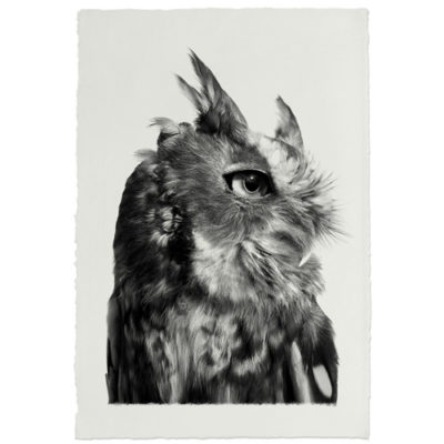 EASTERN SCREECH OWL HANDMADE PAPER 500x500