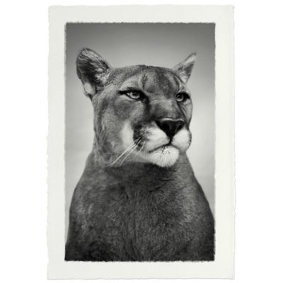 MOUNTAIN LION HANDMADE PAPER 500x500