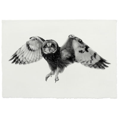 SHORT EARED OWL FLYING HANDMADE PAPER 500x500