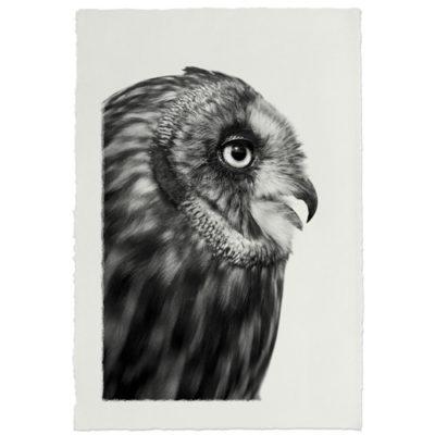 SHORT EARED OWL HANDMADE PAPER 500x500